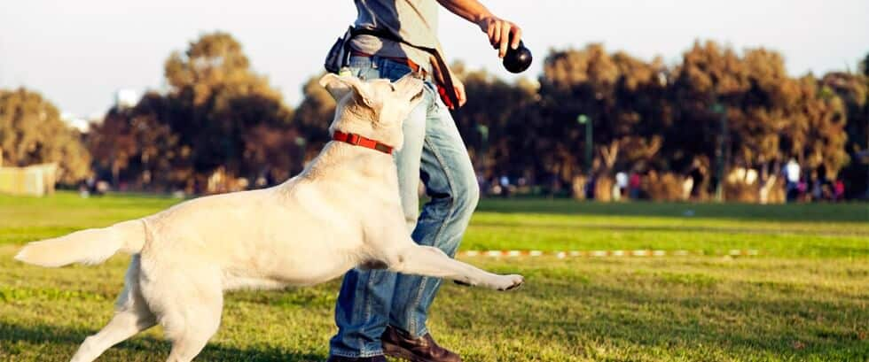 guide to successful dog training