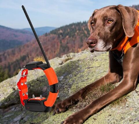 Training tips to make a great Dog